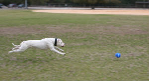 Dogo Training picture.jpg