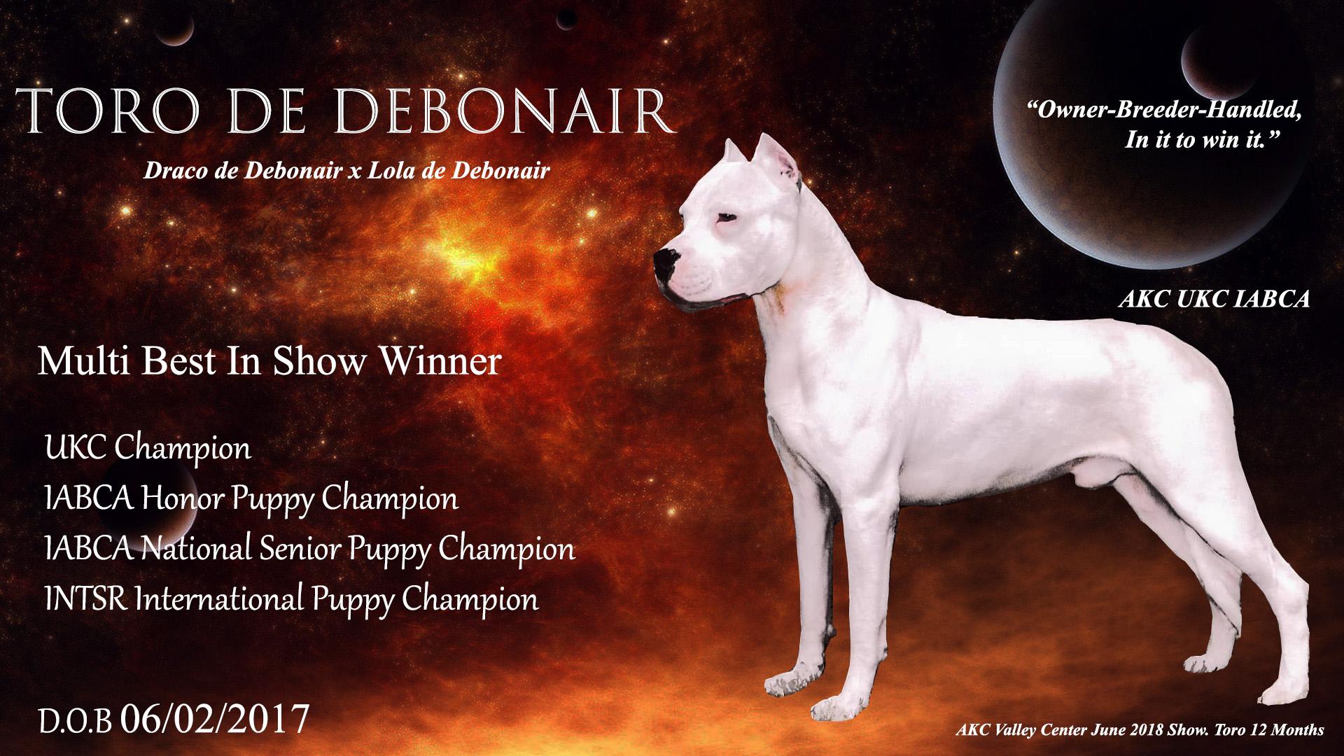 Dogo, Champion Dogo Argentino, Dogo Argentino kennel, Dogo